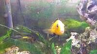 Fisch im Schulaquarium